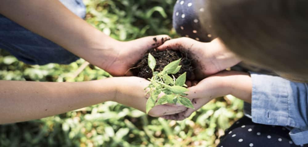 Farmers planting new tree